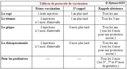 vaccin grippe rhino cheval