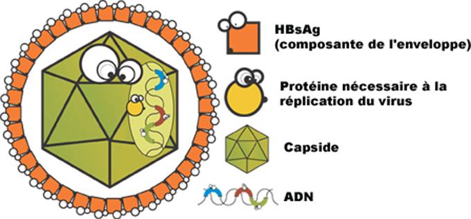 vaccin hepatite b genie genetique
