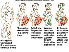 vaccin winrho
